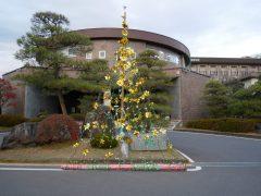 日大明誠:本館前にクリスマスツリーを飾り付け